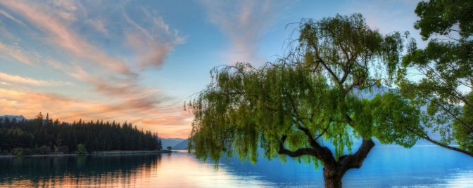 cropped-willow-tree.jpg